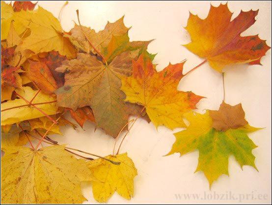 Как сохранить листья клена в поделках.